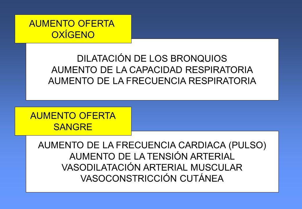 DILATACIÓN DE LOS BRONQUIOS AUMENTO DE LA CAPACIDAD RESPIRATORIA