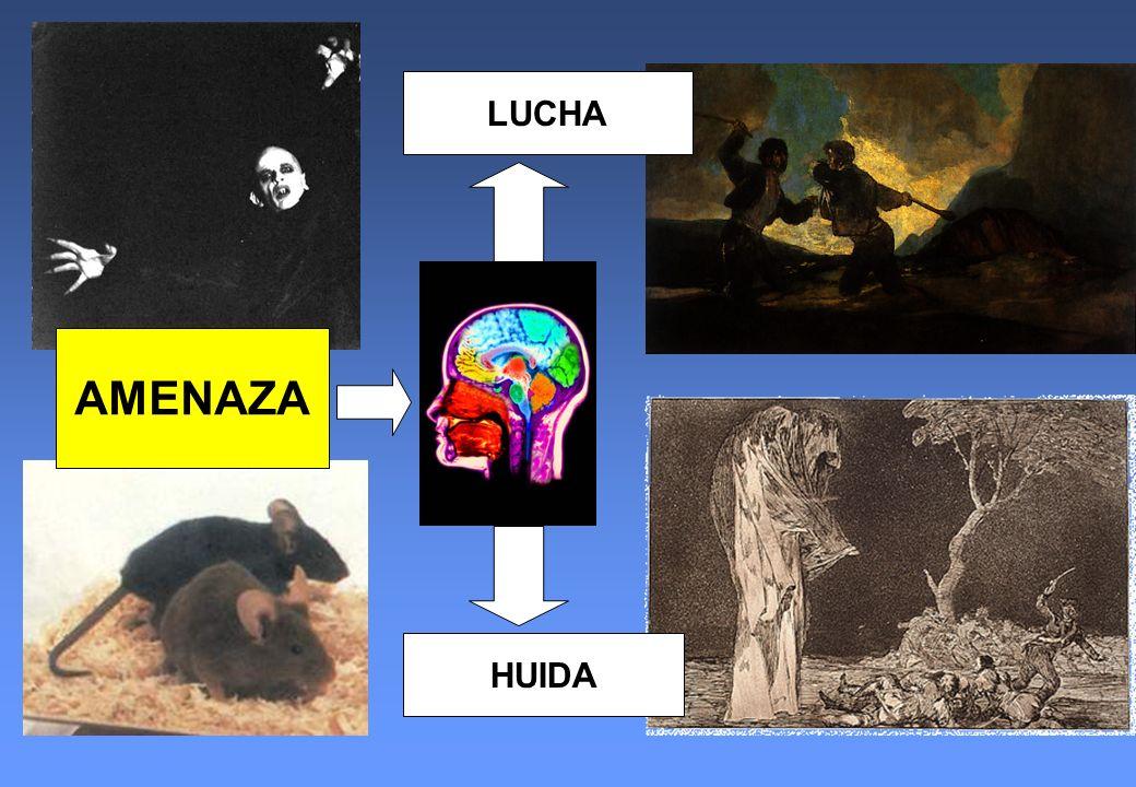LUCHA AMENAZA HUIDA