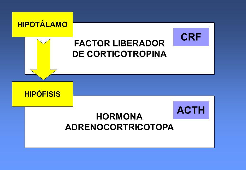 CRF ACTH FACTOR LIBERADOR DE CORTICOTROPINA HORMONA ADRENOCORTRICOTOPA