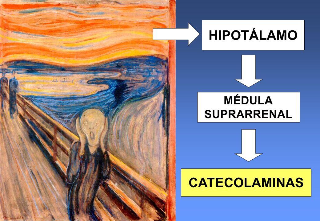 HIPOTÁLAMO CATECOLAMINAS