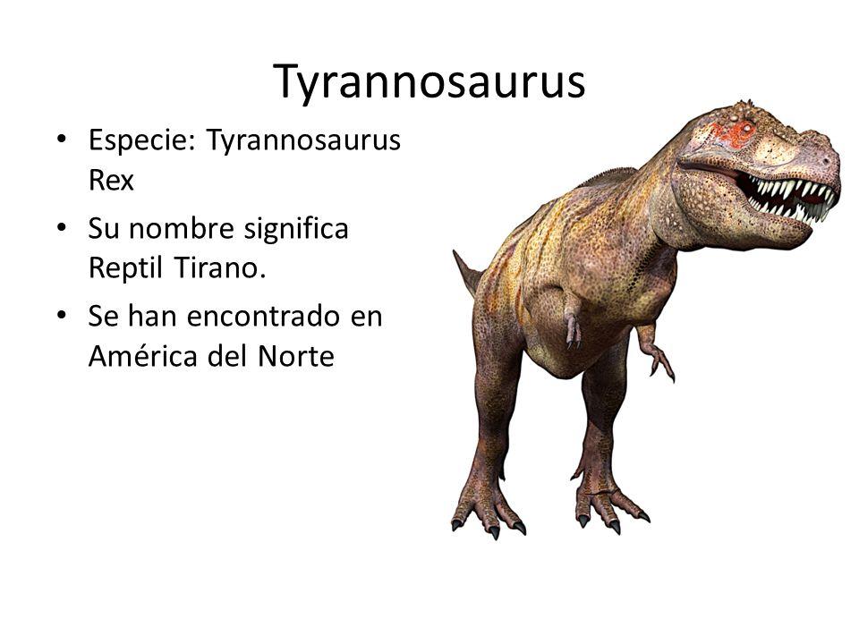 Tyrannosaurus Especie: Tyrannosaurus Rex