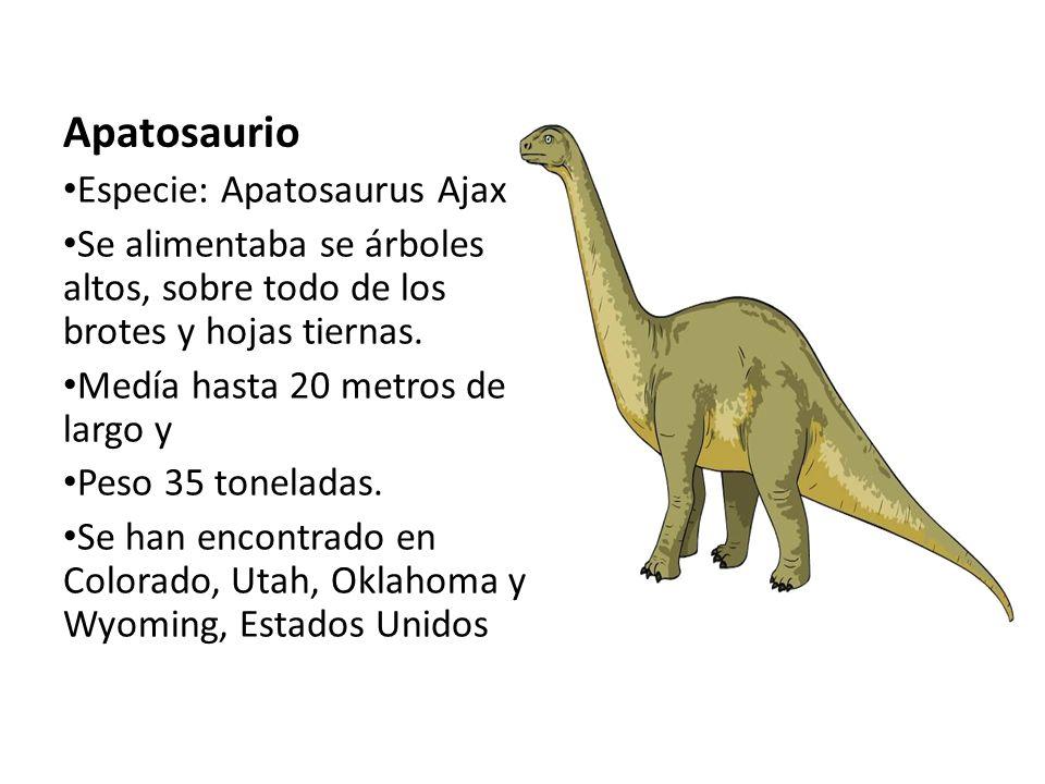 Apatosaurio Especie: Apatosaurus Ajax