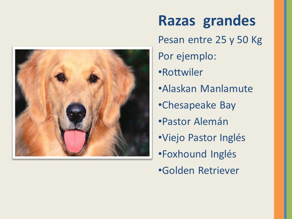 Razas grandes Pesan entre 25 y 50 Kg Por ejemplo: Rottwiler