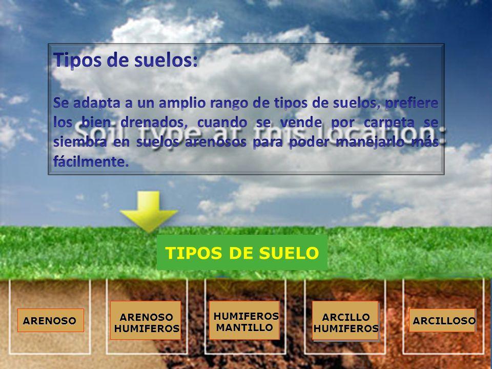 Bienvenidos ppt descargar for Suelos y tipos de suelos