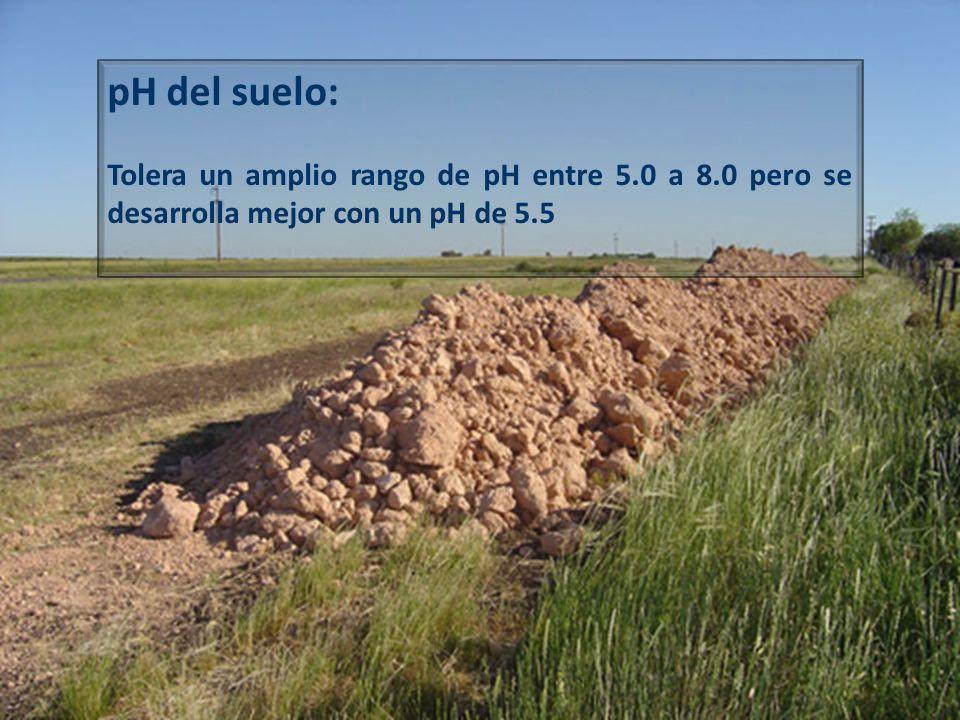 pH del suelo:Tolera un amplio rango de pH entre 5.0 a 8.0 pero se desarrolla mejor con un pH de 5.5.
