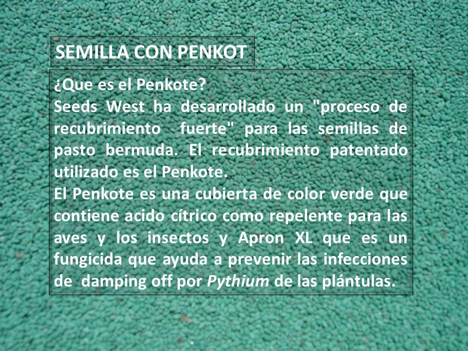 SEMILLA CON PENKOT ¿Que es el Penkote