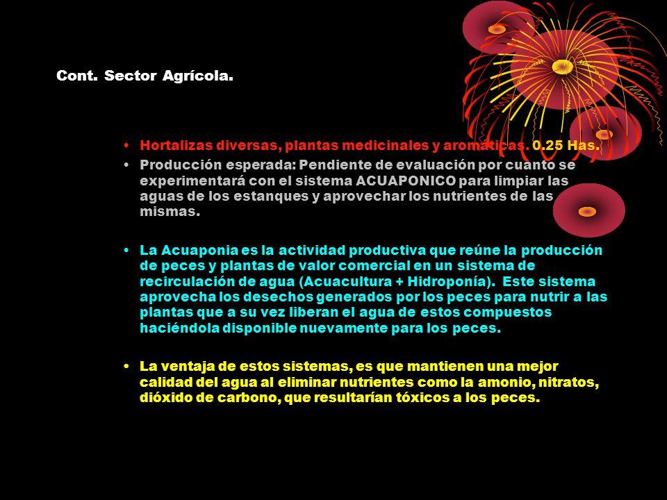 Cont. Sector Agrícola. Hortalizas diversas, plantas medicinales y aromáticas. 0.25 Has.