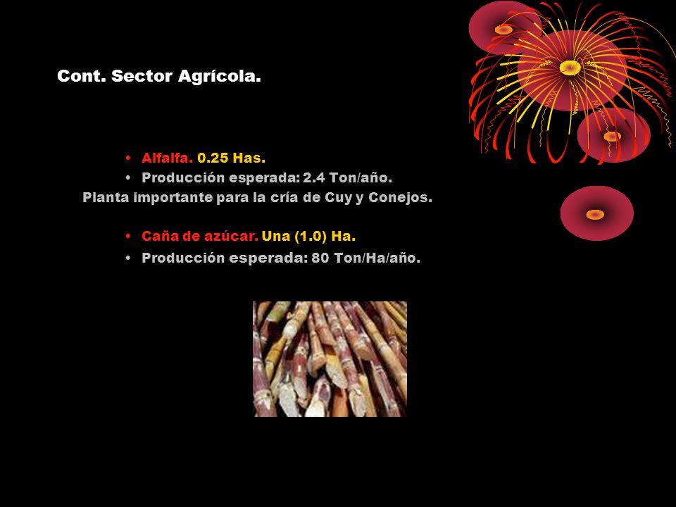 Cont. Sector Agrícola. Alfalfa. 0.25 Has.