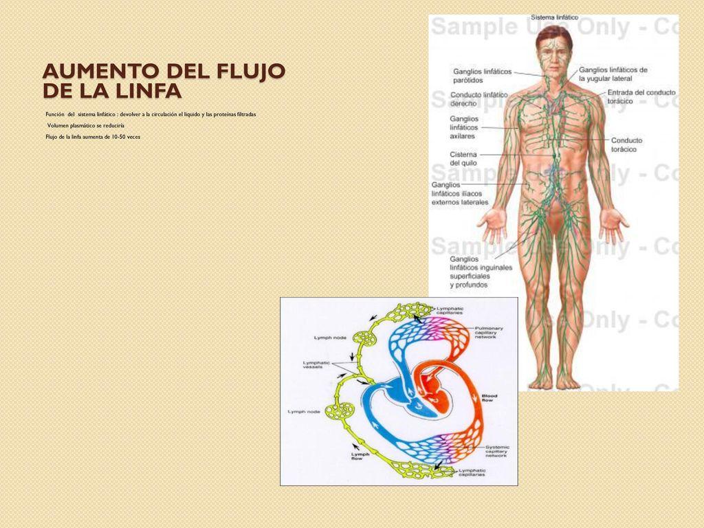 Lujo Ganglios Linfáticos Gráfico Colección - Imágenes de Anatomía ...