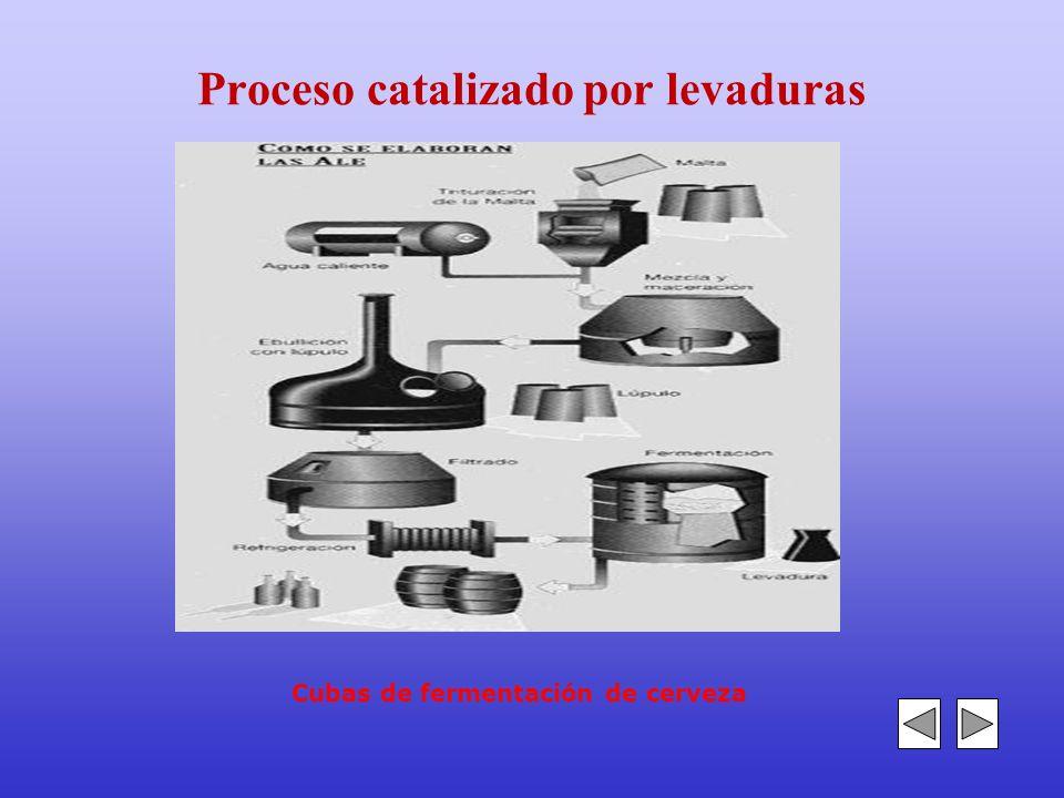 Proceso catalizado por levaduras