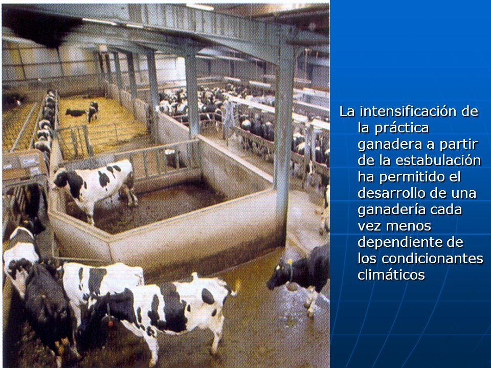 La intensificación de la práctica ganadera a partir de la estabulación ha permitido el desarrollo de una ganadería cada vez menos dependiente de los condicionantes climáticos