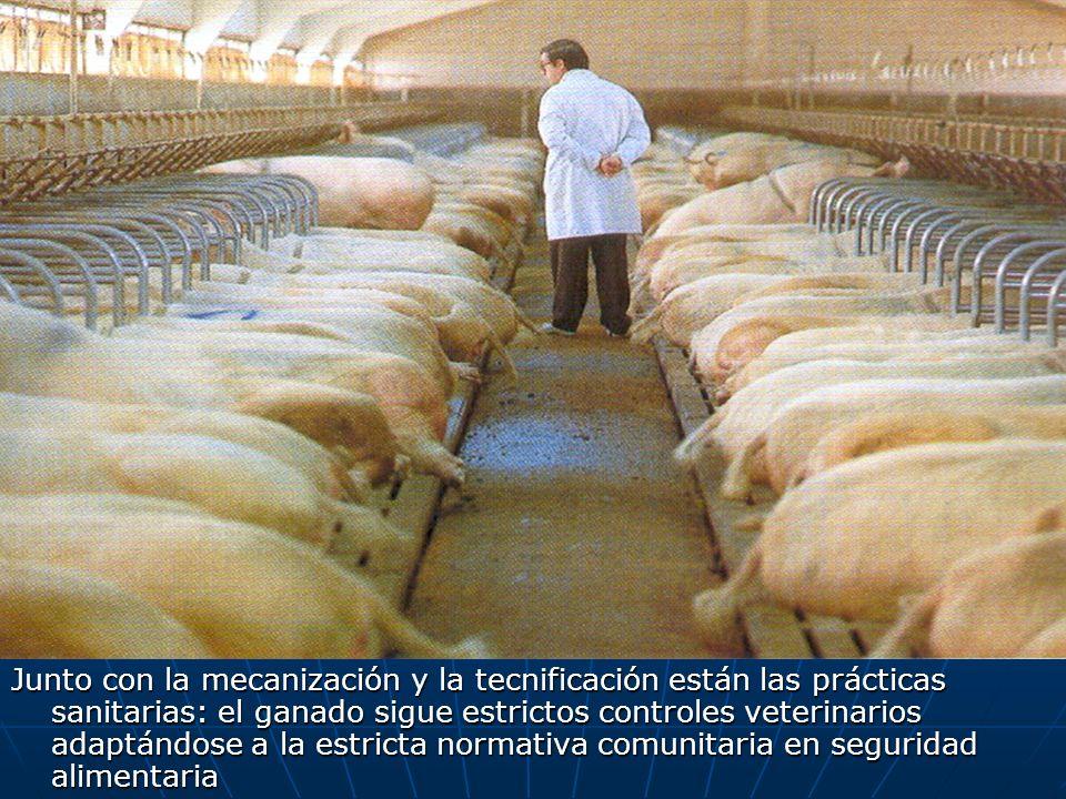 Junto con la mecanización y la tecnificación están las prácticas sanitarias: el ganado sigue estrictos controles veterinarios adaptándose a la estricta normativa comunitaria en seguridad alimentaria