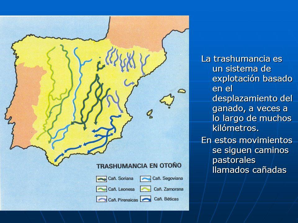 La trashumancia es un sistema de explotación basado en el desplazamiento del ganado, a veces a lo largo de muchos kilómetros.