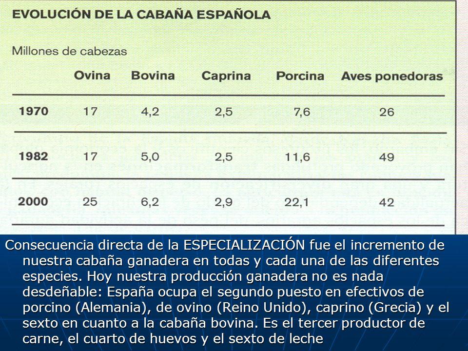 Consecuencia directa de la ESPECIALIZACIÓN fue el incremento de nuestra cabaña ganadera en todas y cada una de las diferentes especies.