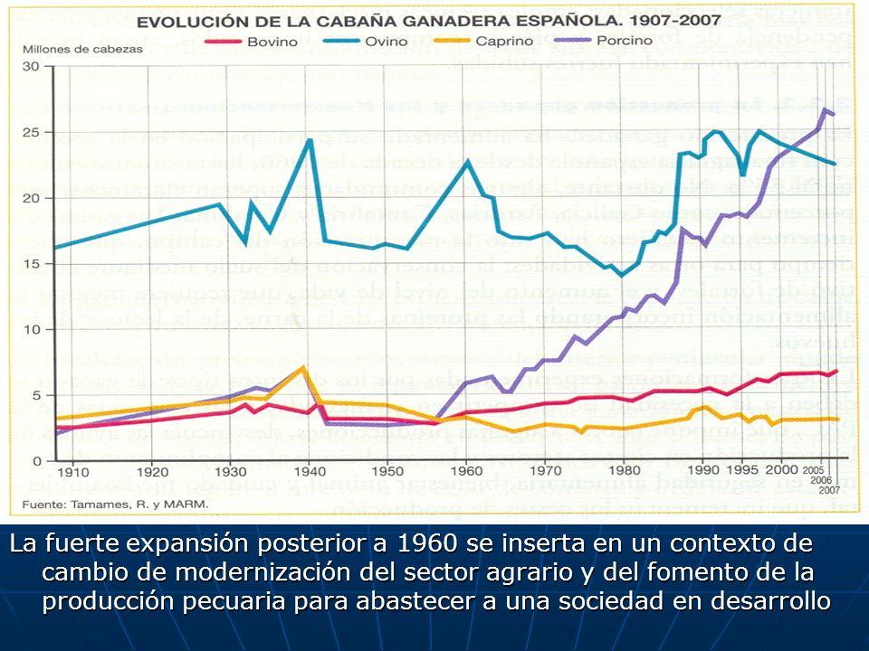 La fuerte expansión posterior a 1960 se inserta en un contexto de cambio de modernización del sector agrario y del fomento de la producción pecuaria para abastecer a una sociedad en desarrollo