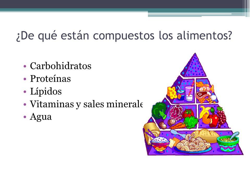 ¿De qué están compuestos los alimentos