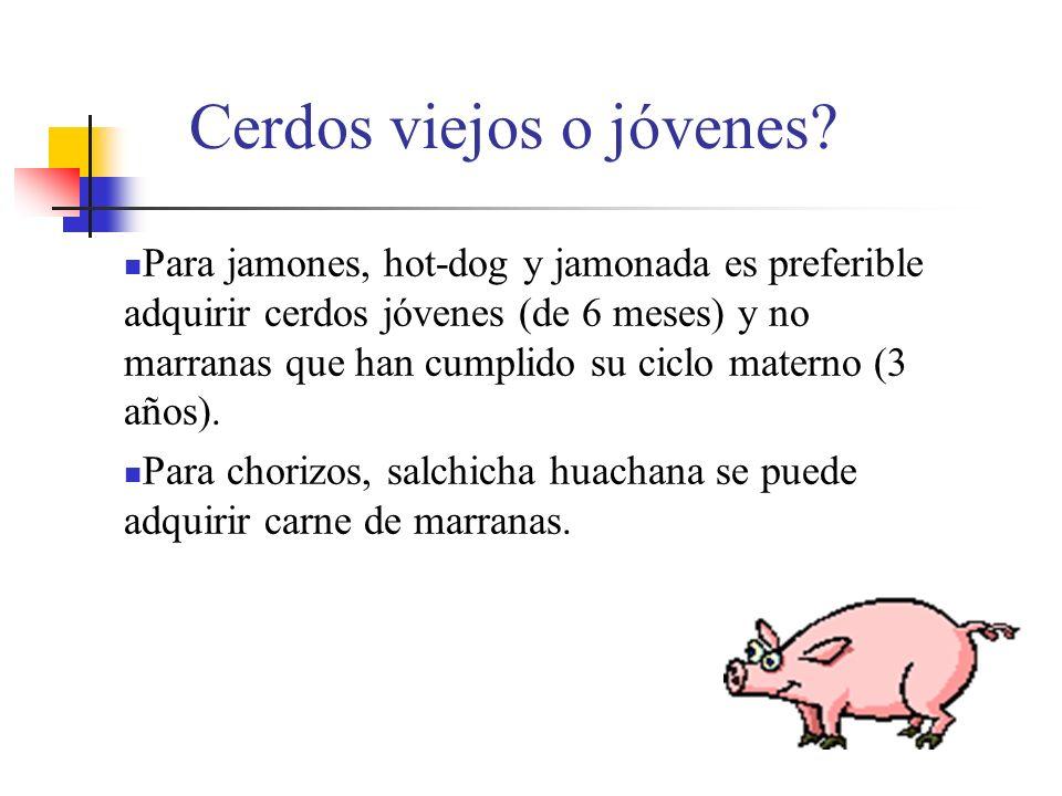 Cerdos viejos o jóvenes