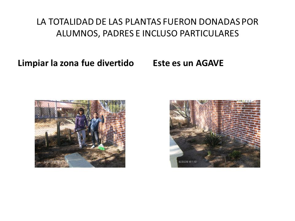 LA TOTALIDAD DE LAS PLANTAS FUERON DONADAS POR ALUMNOS, PADRES E INCLUSO PARTICULARES