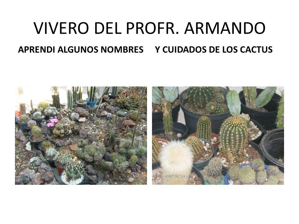 VIVERO DEL PROFR. ARMANDO
