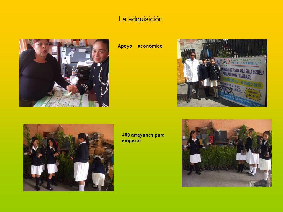 La adquisición Apoyo económico 400 arrayanes para empezar
