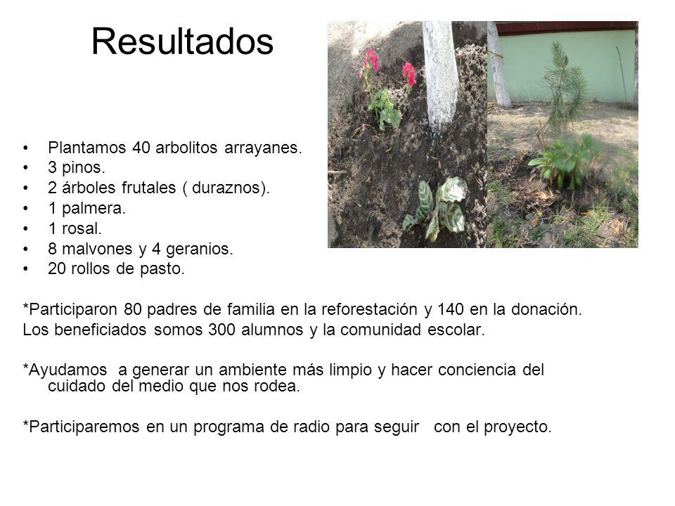 Resultados Plantamos 40 arbolitos arrayanes. 3 pinos.