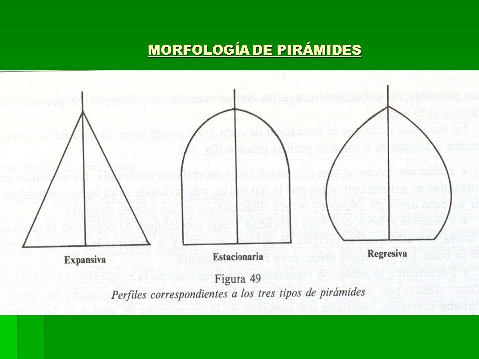 MORFOLOGÍA DE PIRÁMIDES