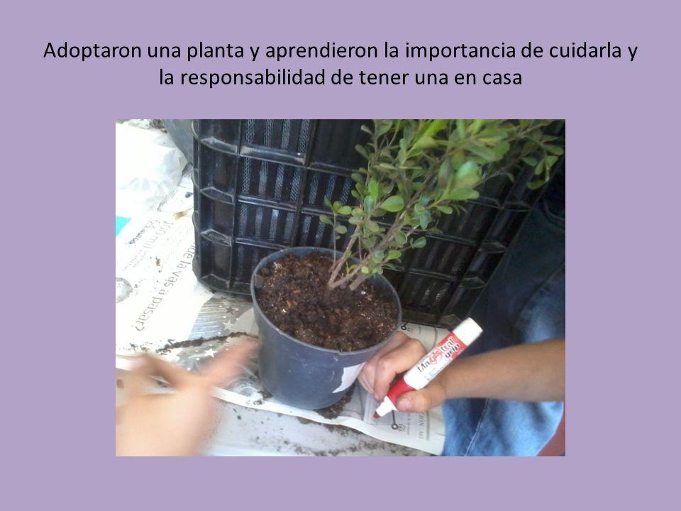 Adoptaron una planta y aprendieron la importancia de cuidarla y la responsabilidad de tener una en casa