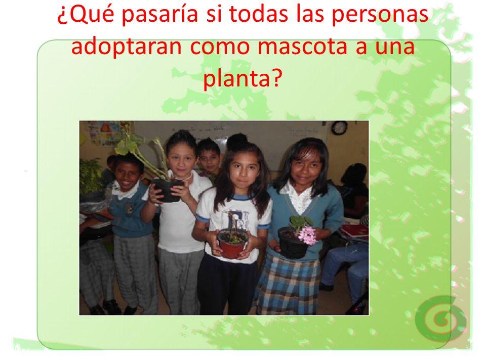 ¿Qué pasaría si todas las personas adoptaran como mascota a una planta
