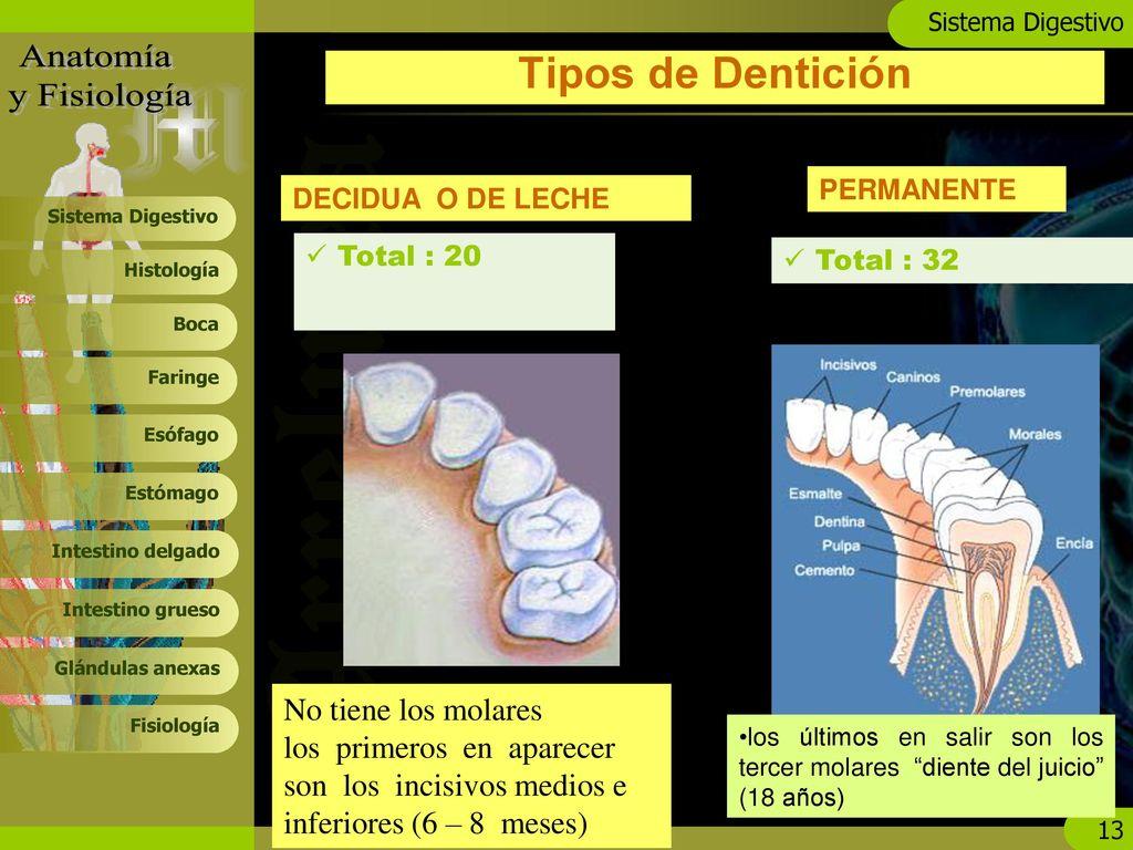 Hermosa Anatomía Y Fisiología Ncti Regalo - Imágenes de Anatomía ...