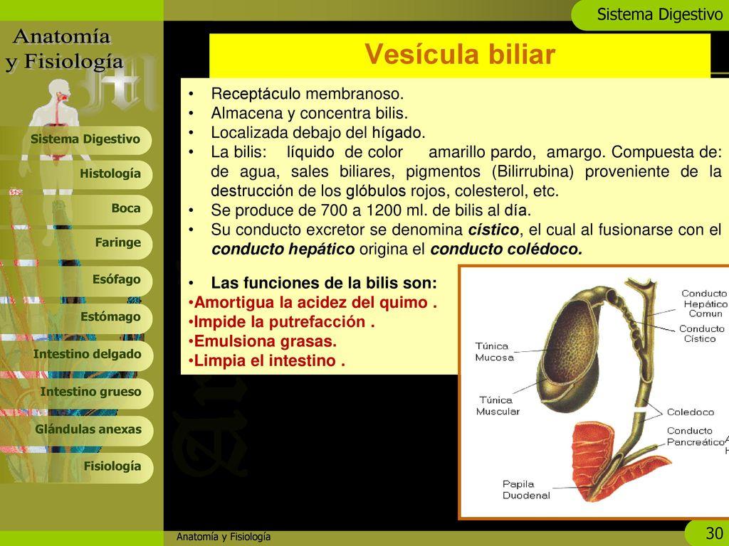 Bonito Anatomía Y Fisiología Marieb 10ª Edición Pdf Componente ...