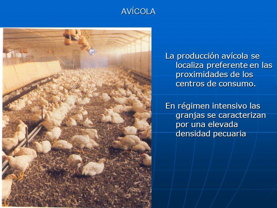 AVÍCOLA La producción avícola se localiza preferente en las proximidades de los centros de consumo.