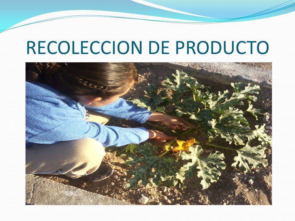 RECOLECCION DE PRODUCTO