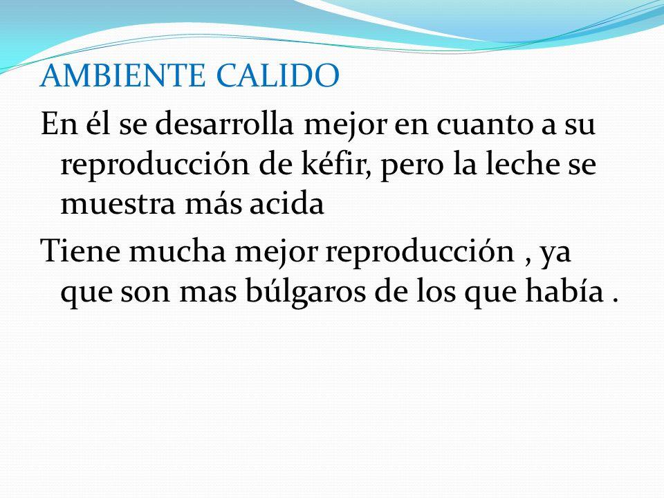 AMBIENTE CALIDO En él se desarrolla mejor en cuanto a su reproducción de kéfir, pero la leche se muestra más acida.
