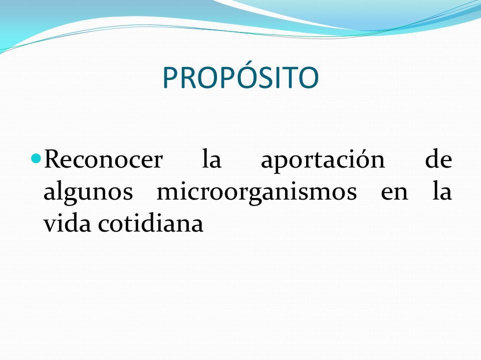 PROPÓSITO Reconocer la aportación de algunos microorganismos en la vida cotidiana