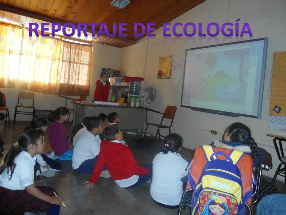 Reportaje de ecología