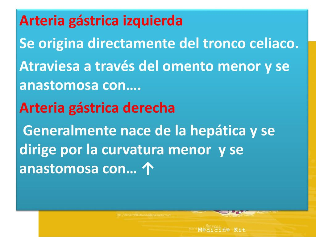 Contemporáneo Anatomía De La Arteria Hepática Derecha Viñeta ...