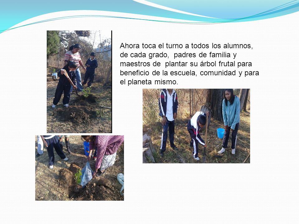 Ahora toca el turno a todos los alumnos, de cada grado, padres de familia y maestros de plantar su árbol frutal para beneficio de la escuela, comunidad y para el planeta mismo.