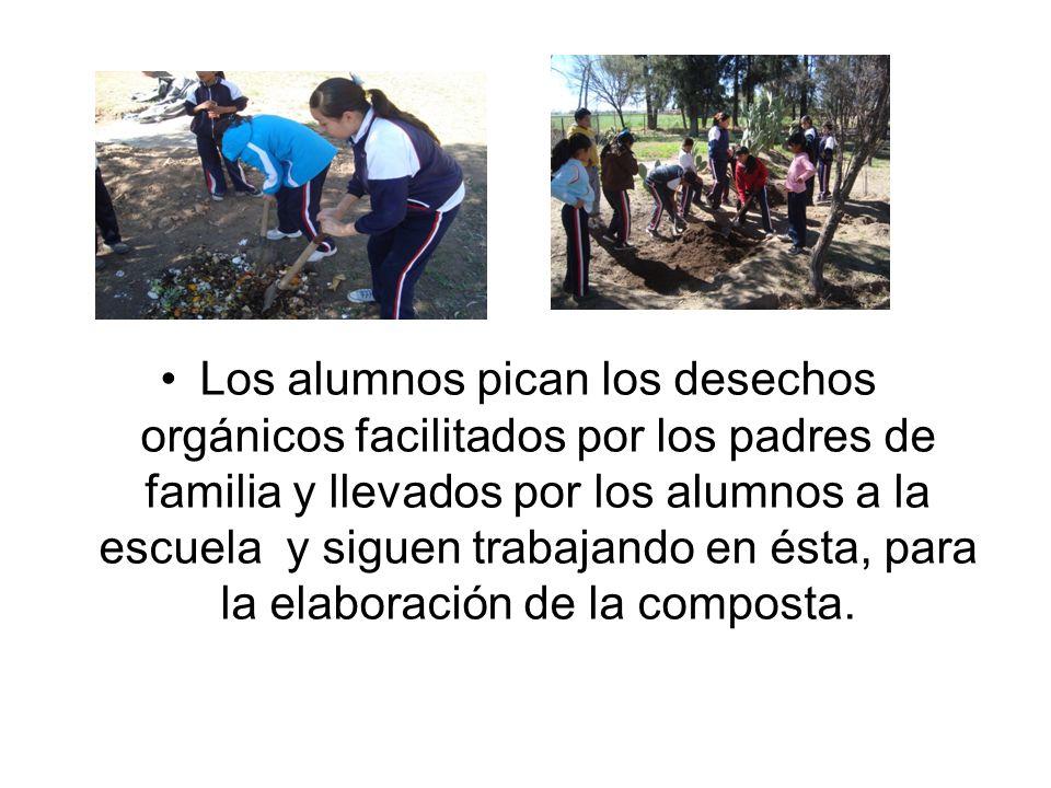 Los alumnos pican los desechos orgánicos facilitados por los padres de familia y llevados por los alumnos a la escuela y siguen trabajando en ésta, para la elaboración de la composta.