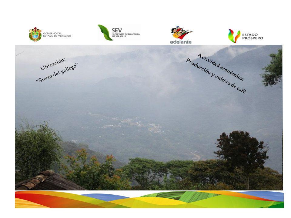 Producción y cultivo de café