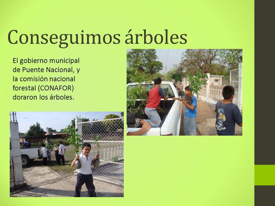 Conseguimos árbolesEl gobierno municipal de Puente Nacional, y la comisión nacional forestal (CONAFOR) doraron los árboles.