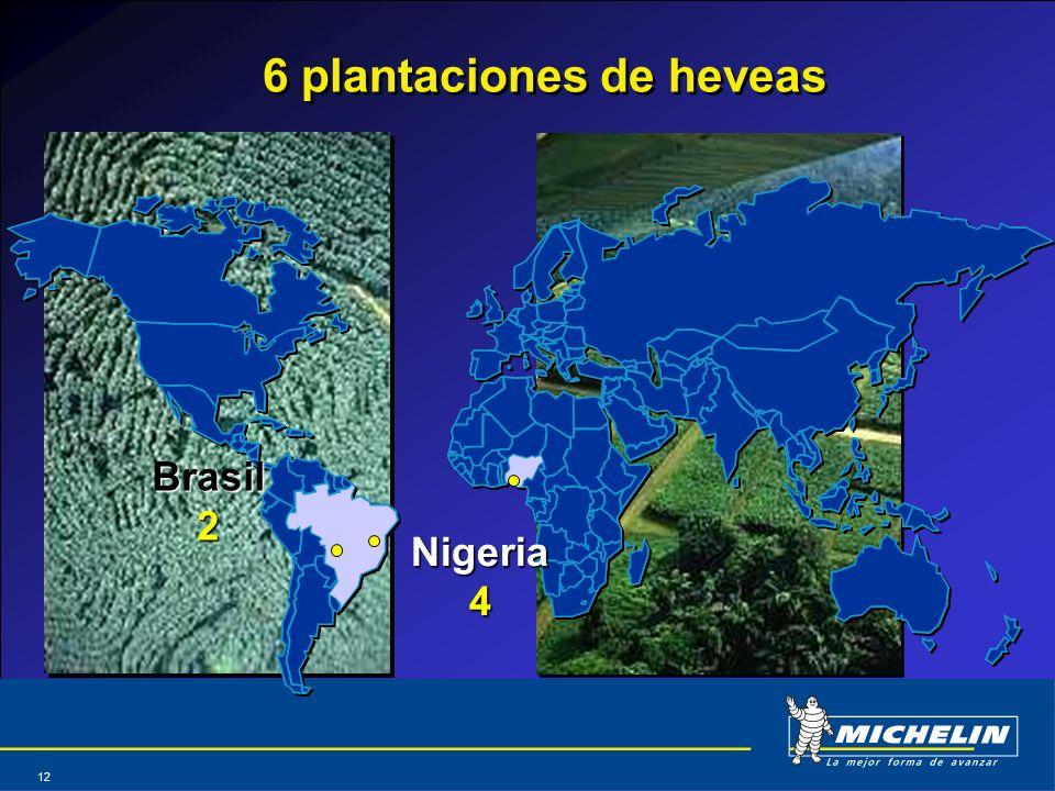 6 plantaciones de heveas