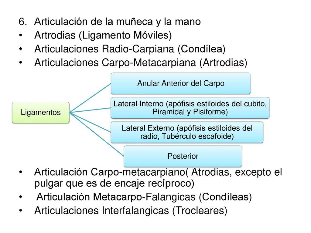 Asombroso Anatomía De Articulación Del Pulgar Bandera - Anatomía de ...