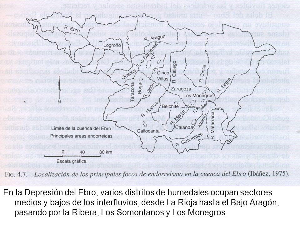 En la Depresión del Ebro, varios distritos de humedales ocupan sectores medios y bajos de los interfluvios, desde La Rioja hasta el Bajo Aragón, pasando por la Ribera, Los Somontanos y Los Monegros.