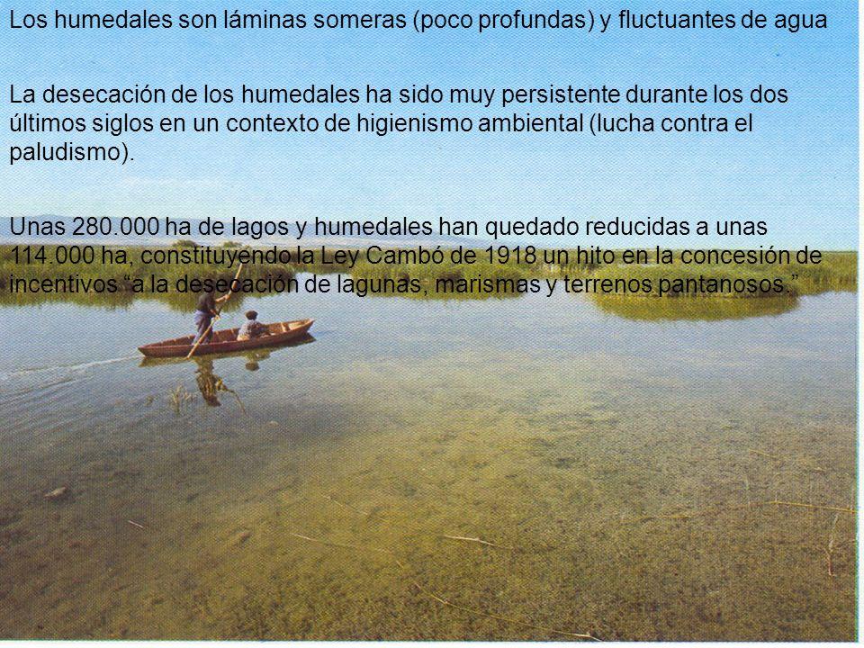 Los humedales son láminas someras (poco profundas) y fluctuantes de agua