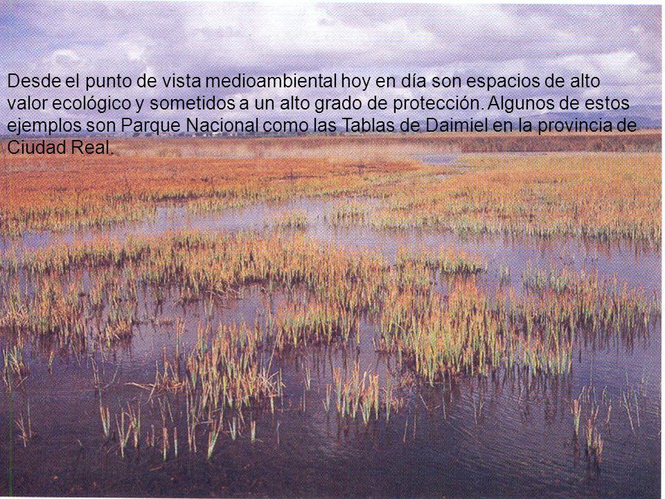 Desde el punto de vista medioambiental hoy en día son espacios de alto valor ecológico y sometidos a un alto grado de protección. Algunos de estos ejemplos son Parque Nacional como las Tablas de Daimiel en la provincia de Ciudad Real.