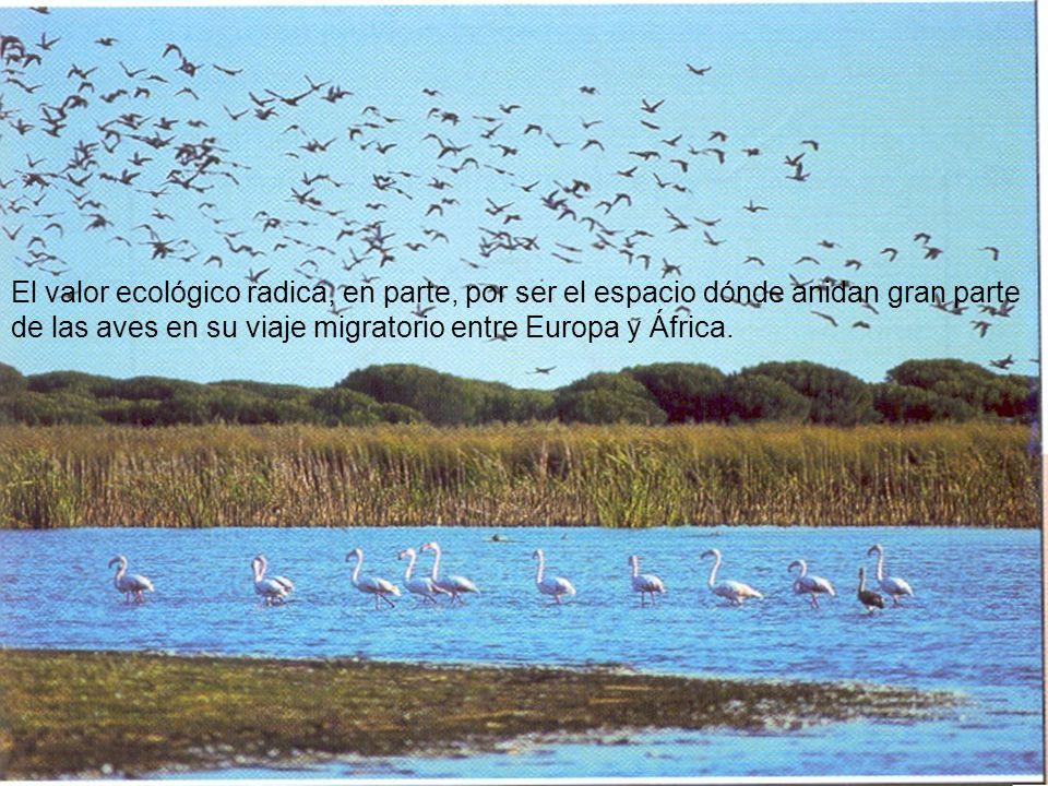 El valor ecológico radica, en parte, por ser el espacio dónde anidan gran parte de las aves en su viaje migratorio entre Europa y África.