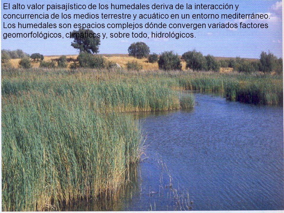 El alto valor paisajístico de los humedales deriva de la interacción y concurrencia de los medios terrestre y acuático en un entorno mediterráneo. Los humedales son espacios complejos dónde convergen variados factores geomorfológicos, climáticos y, sobre todo, hidrológicos.