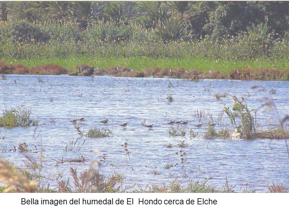 Bella imagen del humedal de El Hondo cerca de Elche