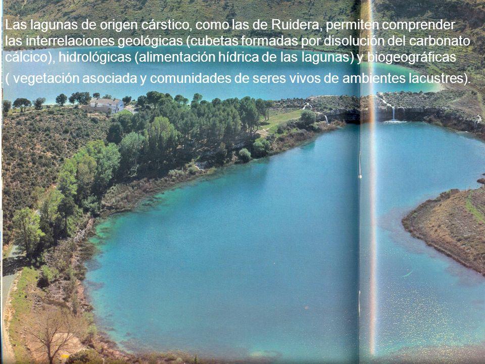 Las lagunas de origen cárstico, como las de Ruidera, permiten comprender las interrelaciones geológicas (cubetas formadas por disolución del carbonato cálcico), hidrológicas (alimentación hídrica de las lagunas) y biogeográficas
