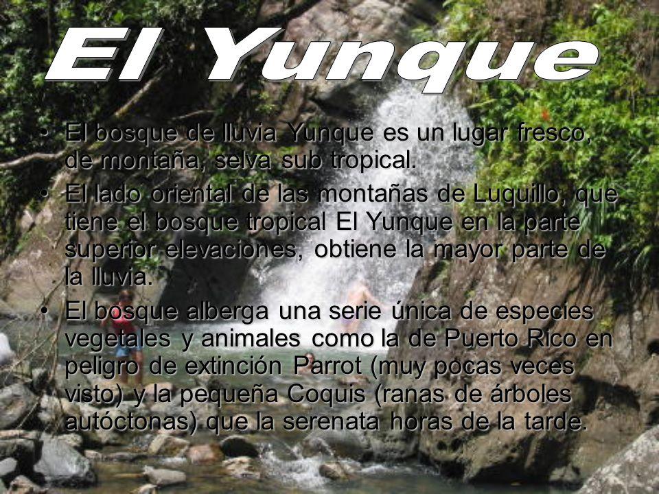 El Yunque El bosque de lluvia Yunque es un lugar fresco, de montaña, selva sub tropical.